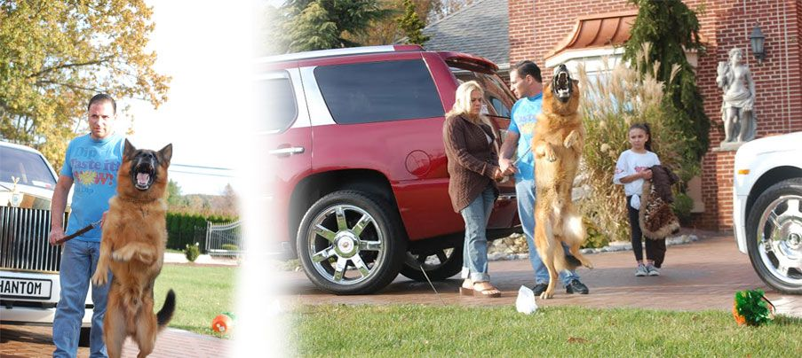 Universalk9w Com Have Huge Selection Of Trained Puppy Dogs For
