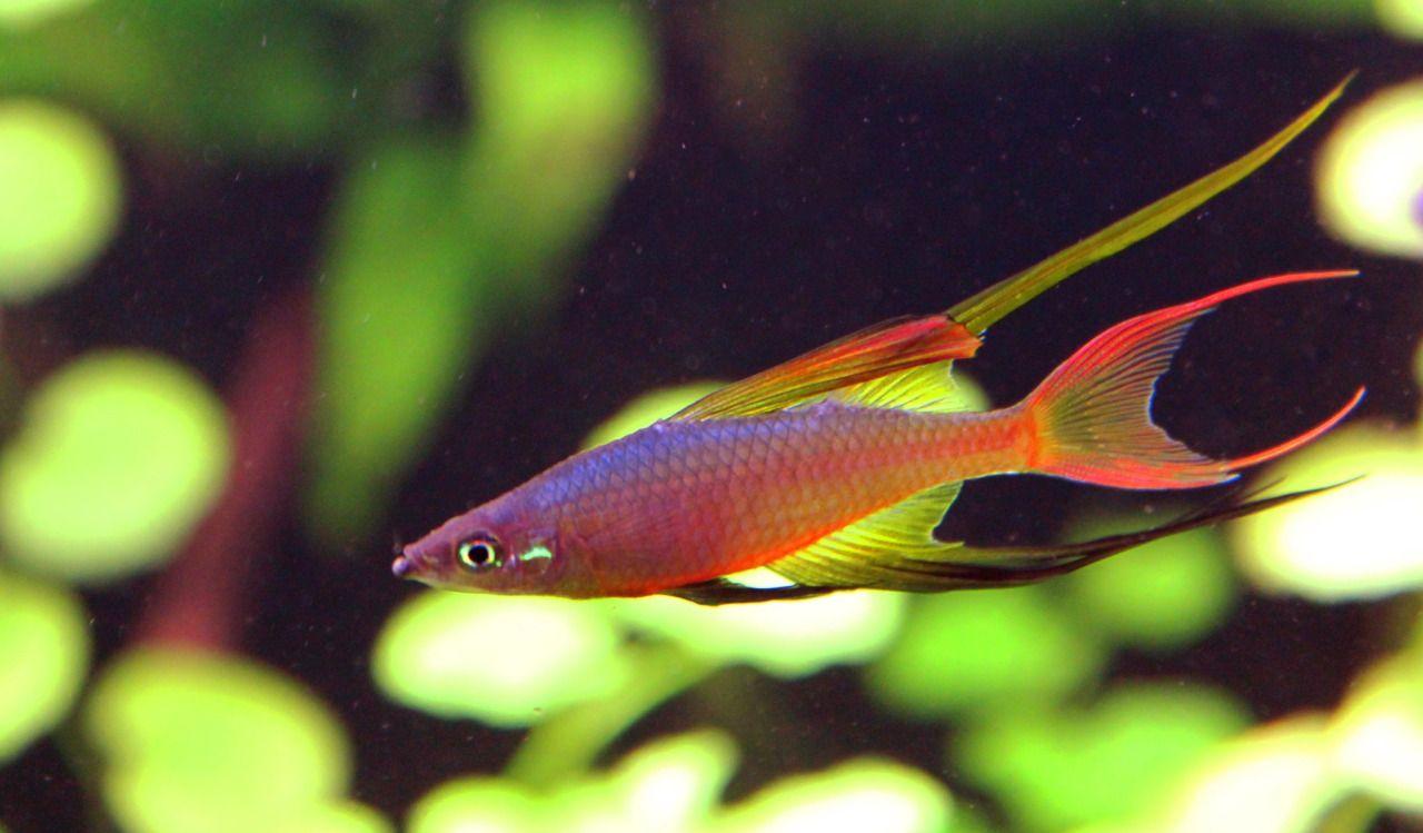 Fresh N Salty Tropische Vissen Vissen Vis