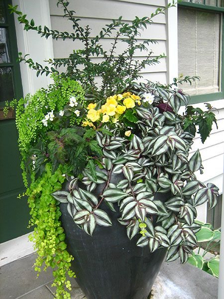 This container planting idea for shade pliments the front door and also creates contrast