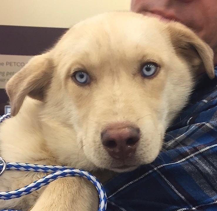 Adopt Dapper blue eyes on Petfinder Animal welfare