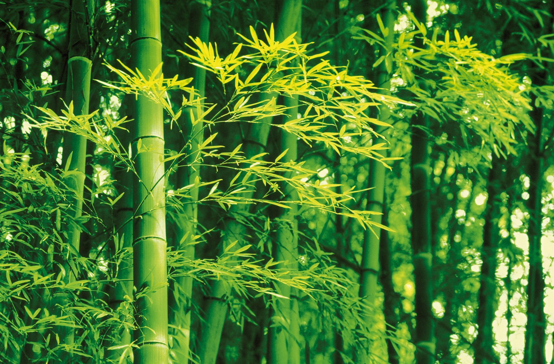 Ideal Decor Bamboo In Spring Wall Mural Part 97