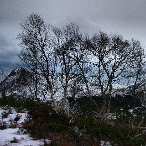 Beautiful nature in Sykkylven. Still the mountain Rømerhornet in the background. #rømerhornet #sykkylven #møreogromsdal  #visitnorway #i_love_norway