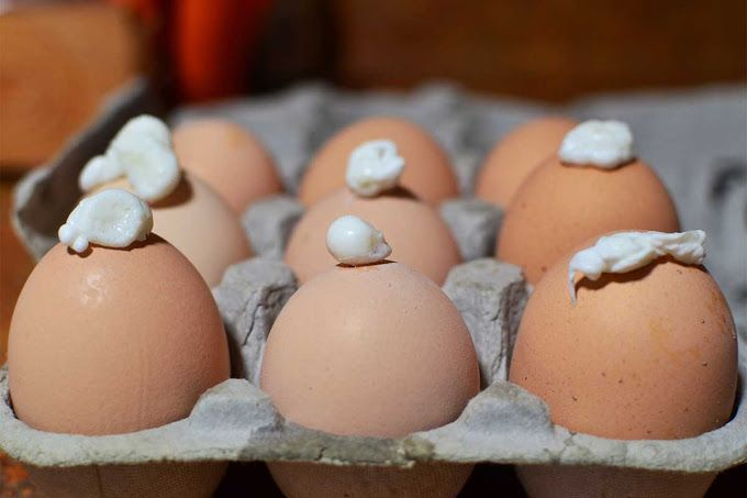 The 7MSN Ranch: The only problem with fresh eggs ... finally solved