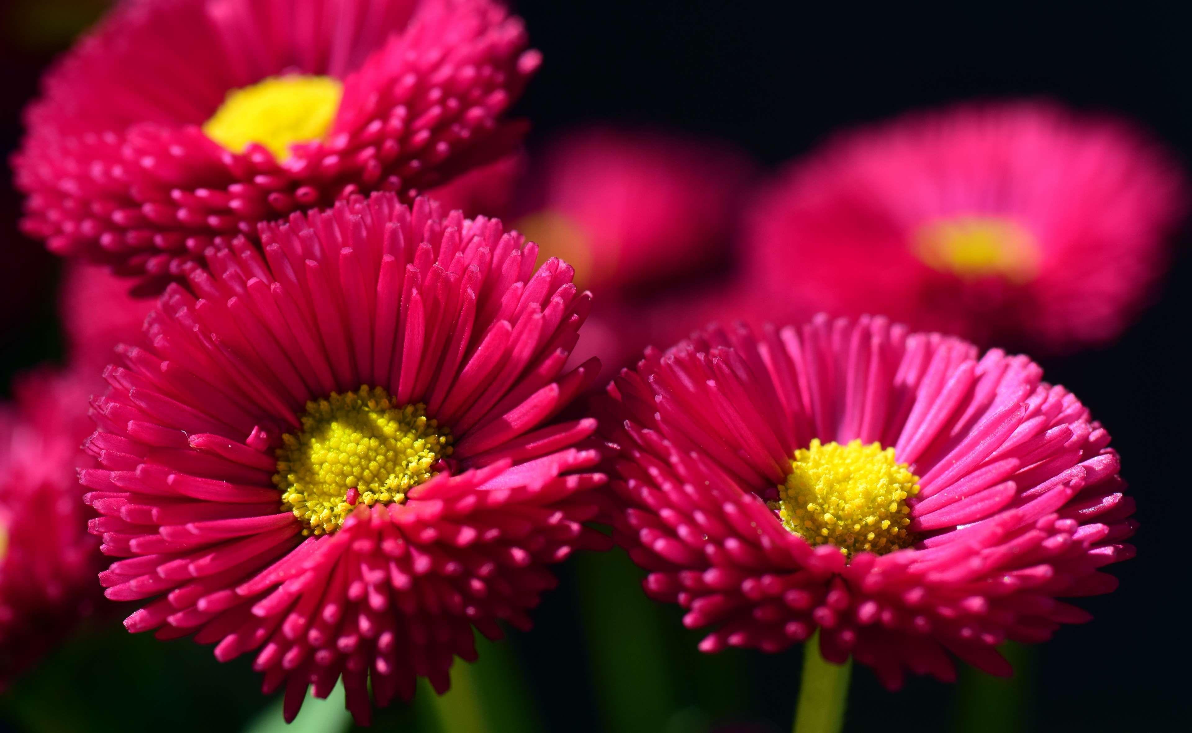 bloom #blossom #bright #close #color #colorful #composites #cultivar ...