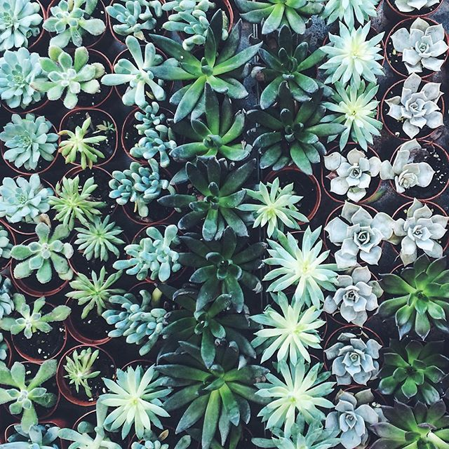 Succulents At Terrain At Styer S Caught By Instagram Apartmentf15