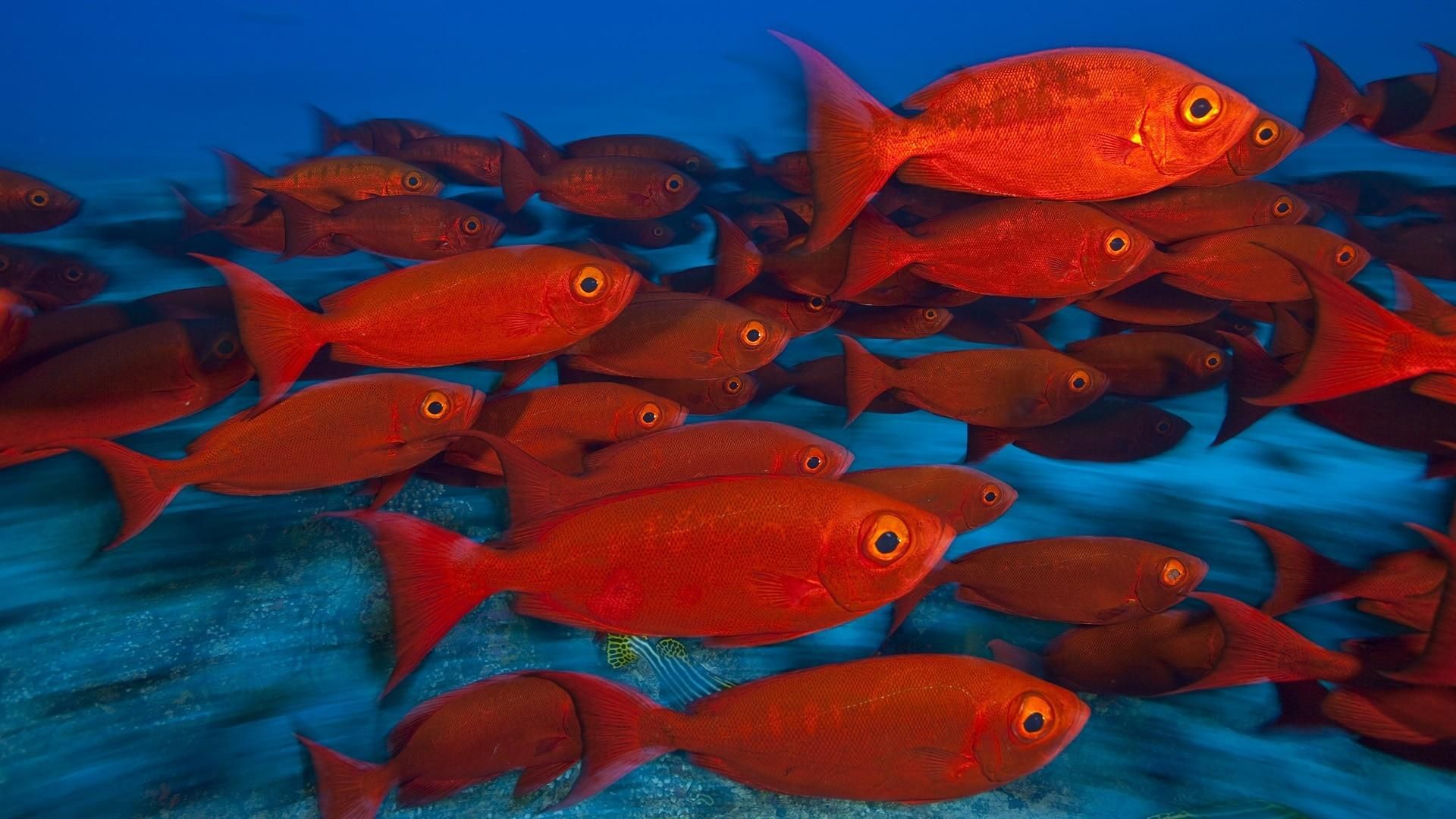 awesome animals fishes tropical red color eyes underwater sea ocean ...