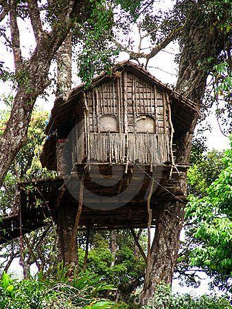 Insane Tree Houses tree house in the forest | tree houses | pinterest | alberi, foto