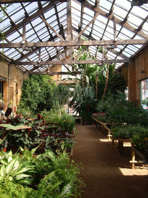This Morning I Went To Paradise : Plants : Hivernacle