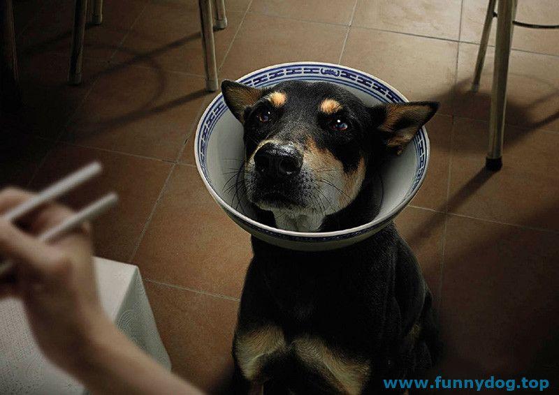 Funny Dog 143 1
