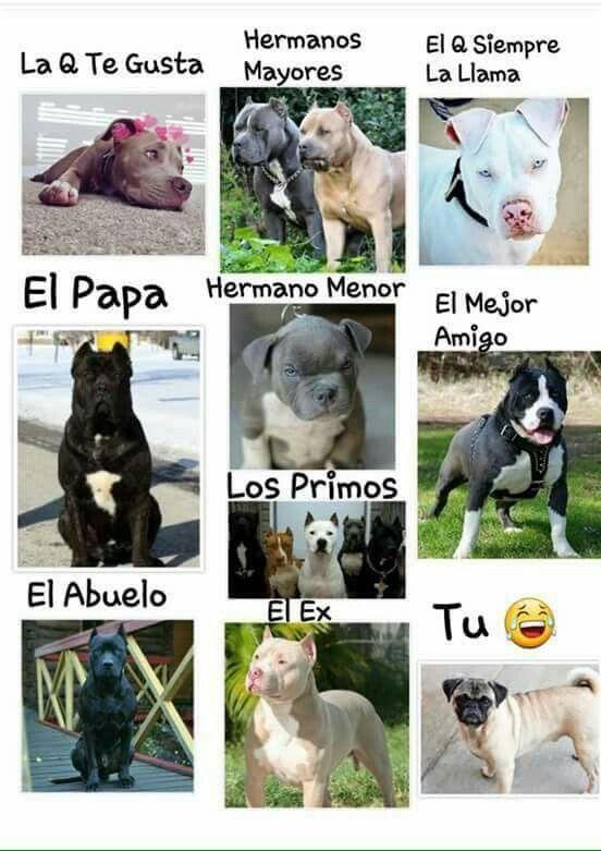Muy Cierto Humor Divertido Sobre Animales Memes De Perros Chistosos Memes De Animales Divertidos