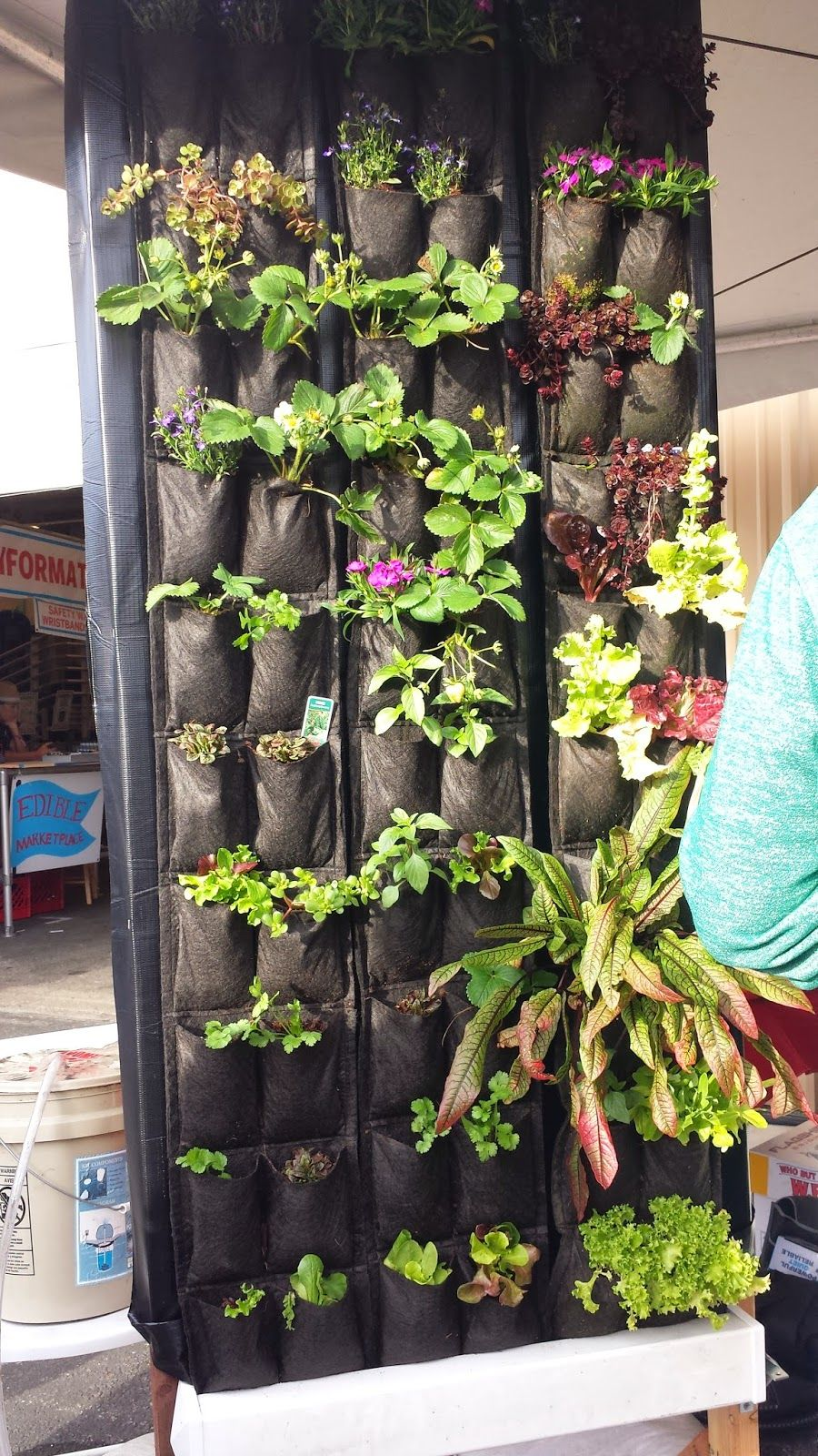 The Living Wall Herb garden wall, Hydroponic gardening