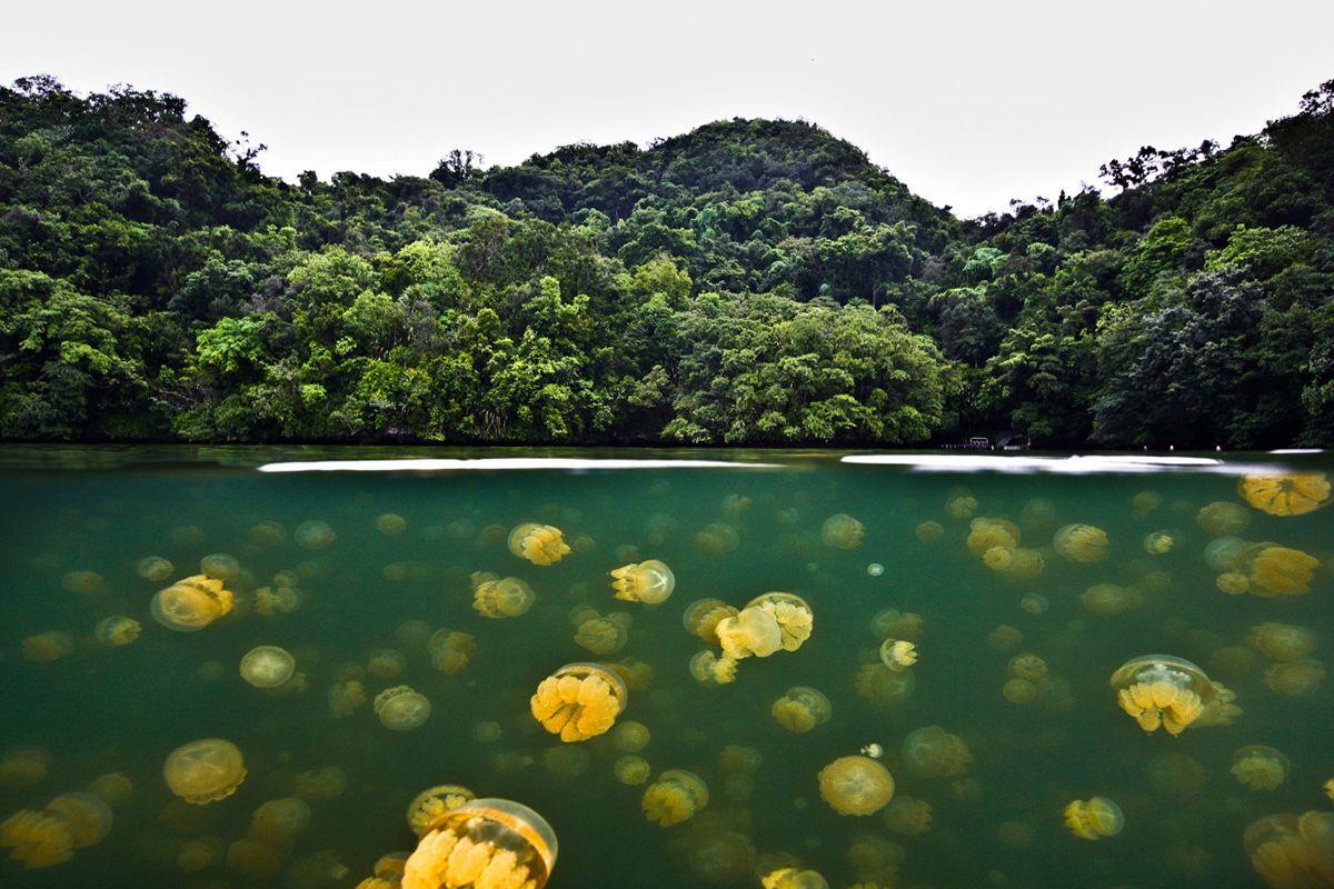 Il lago delle meduse dorate