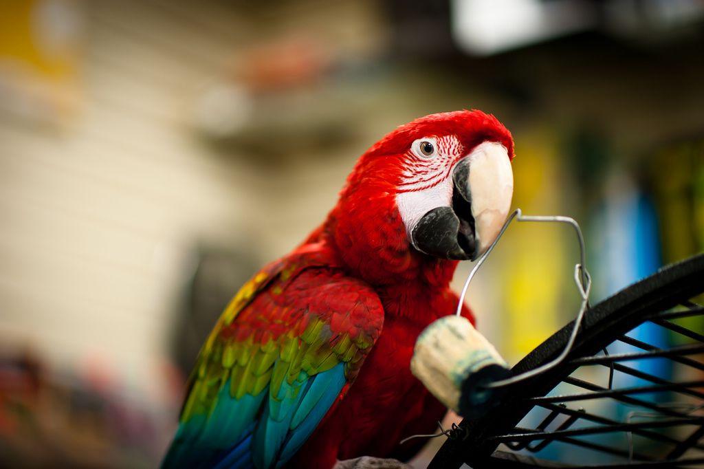ป กพ นโดย Alexander Wang ใน Pets กรงนก