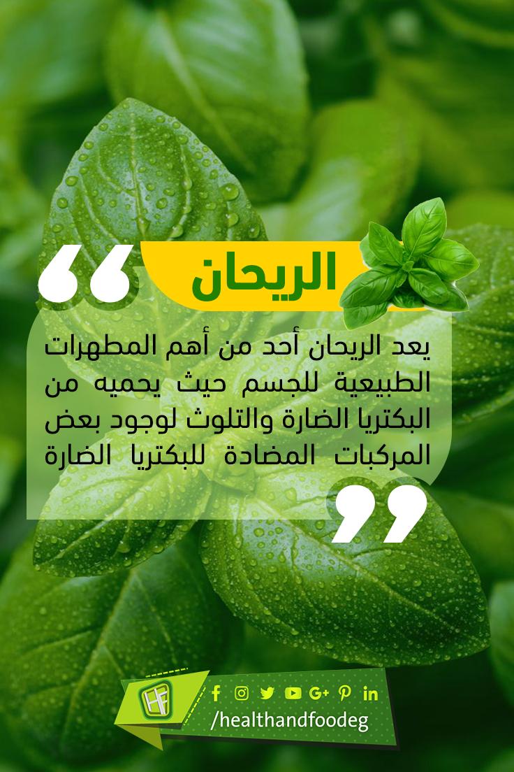 الريحان فوائد طبية عديدة ويعتبر صيدلية متكاملة ومن أكثر فوائده العلاجية كمطهر وقاتل للبكتريا لاحتوائه على الزيوت الطيارة مثل الاستراجول Fruit Food Cantaloupe
