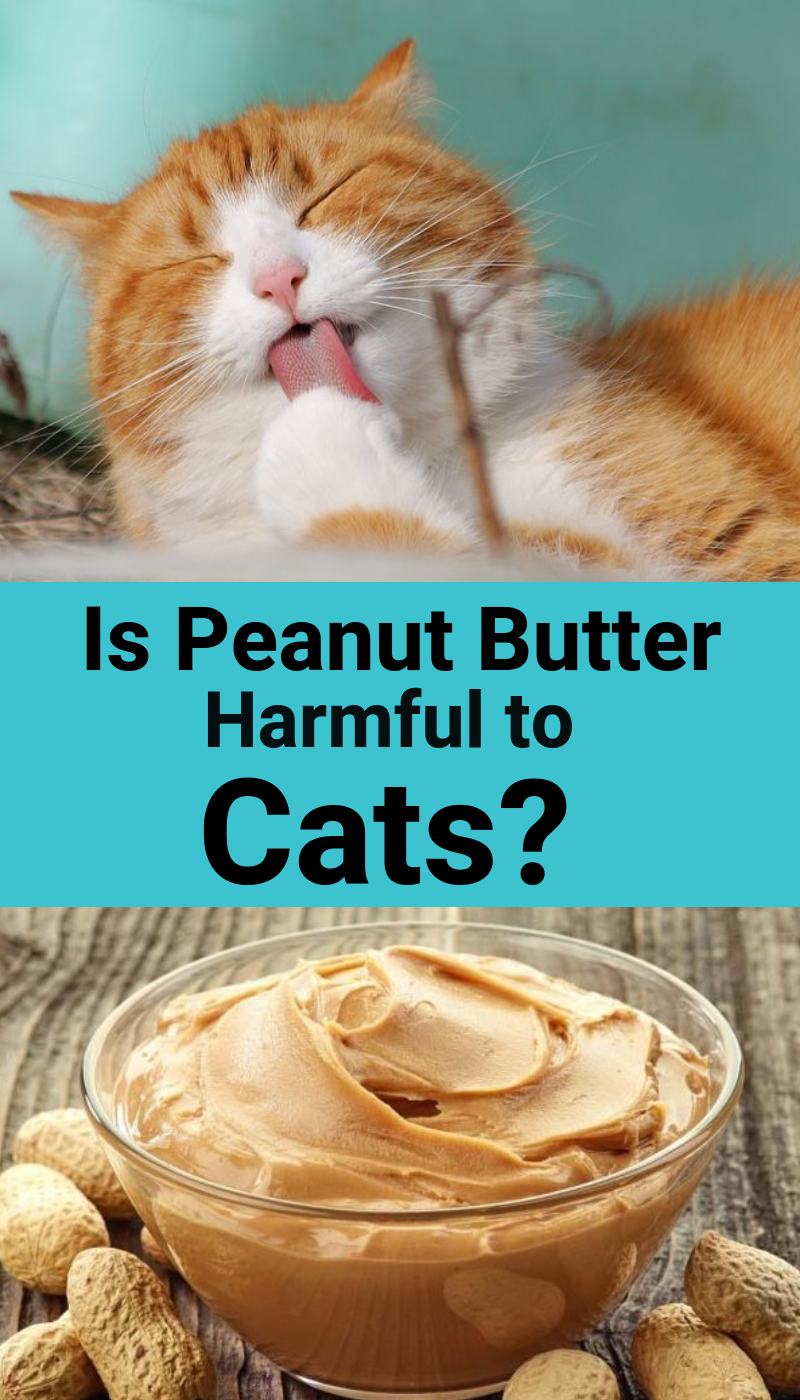 Human Food on Your Cat's Menu What Is Healthy for Your