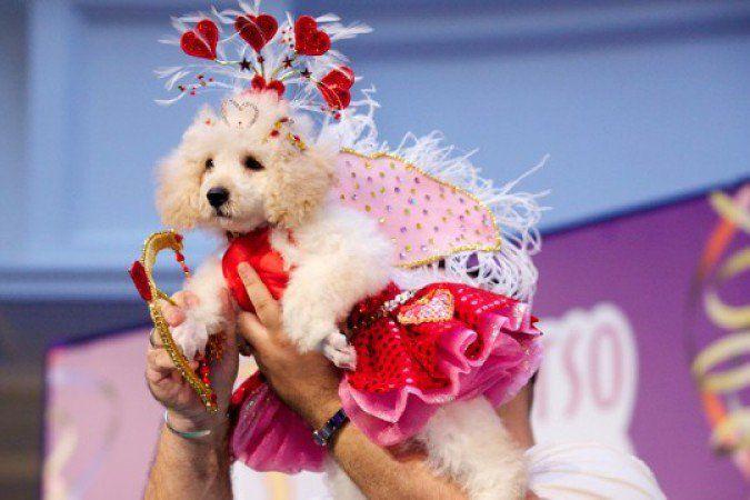 RW Lacinhos: Carnaval Pet