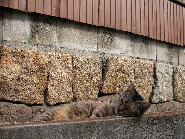 尾道の民家に続く道の脇で、縁石をまくらにした猫の顔を、正面から撮影。
