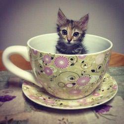 We Heart It 経由の画像 https://weheartit.com/entry/156087879 #cat #cute #green #kawaii #kitten #purple #teacup #tumblr #animalsinteacups