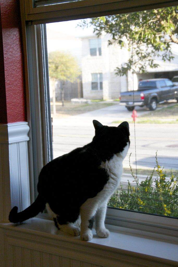 Cat Proof Retractable Screen Door As Shown By Photo Of