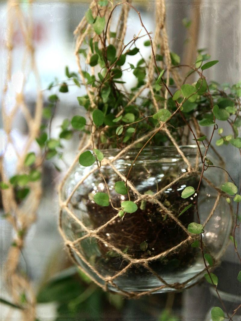 Koti kaupungin laidalla: Kasvihuone on valmis