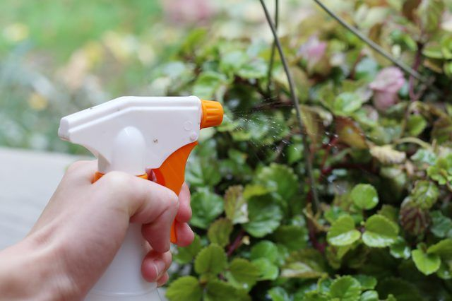 How To Get Rid Of White Bugs On Green Plants With Images Green Plants White Bugs On Plants Mealy Bugs