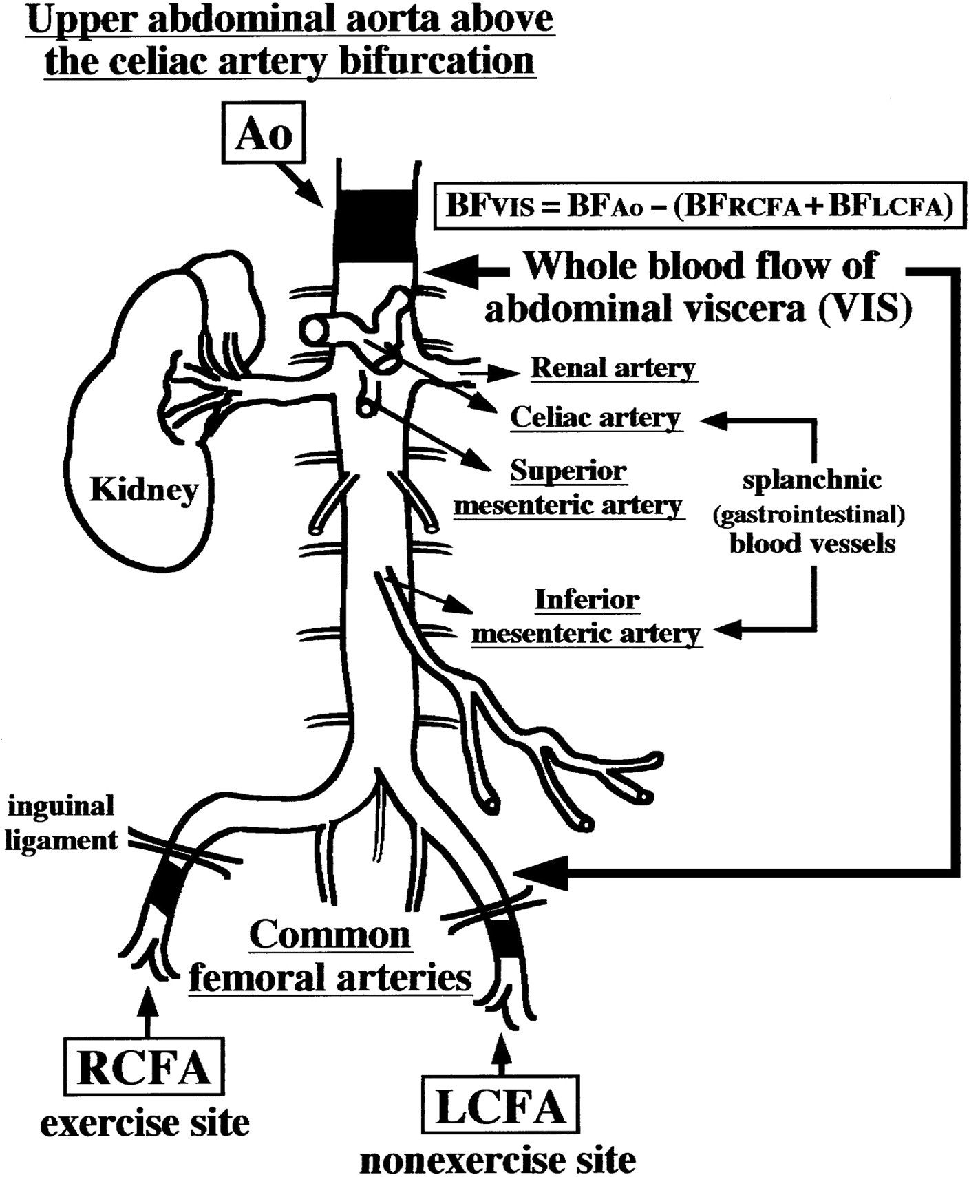 Blood Flow Ultrasound