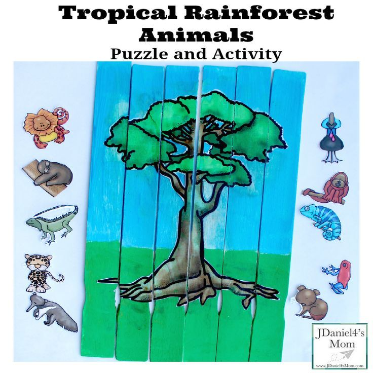 tropical rainforest animals puzzle and activity free animals and tree printables are available to download