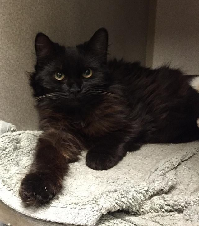 Adopt Winky On Petfinder Long Haired Cats Kitty Animal Rescue