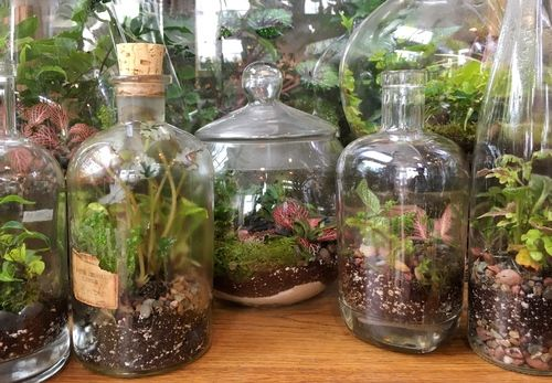 Welcome Garden Terrarium Terrarium Indoor Plants