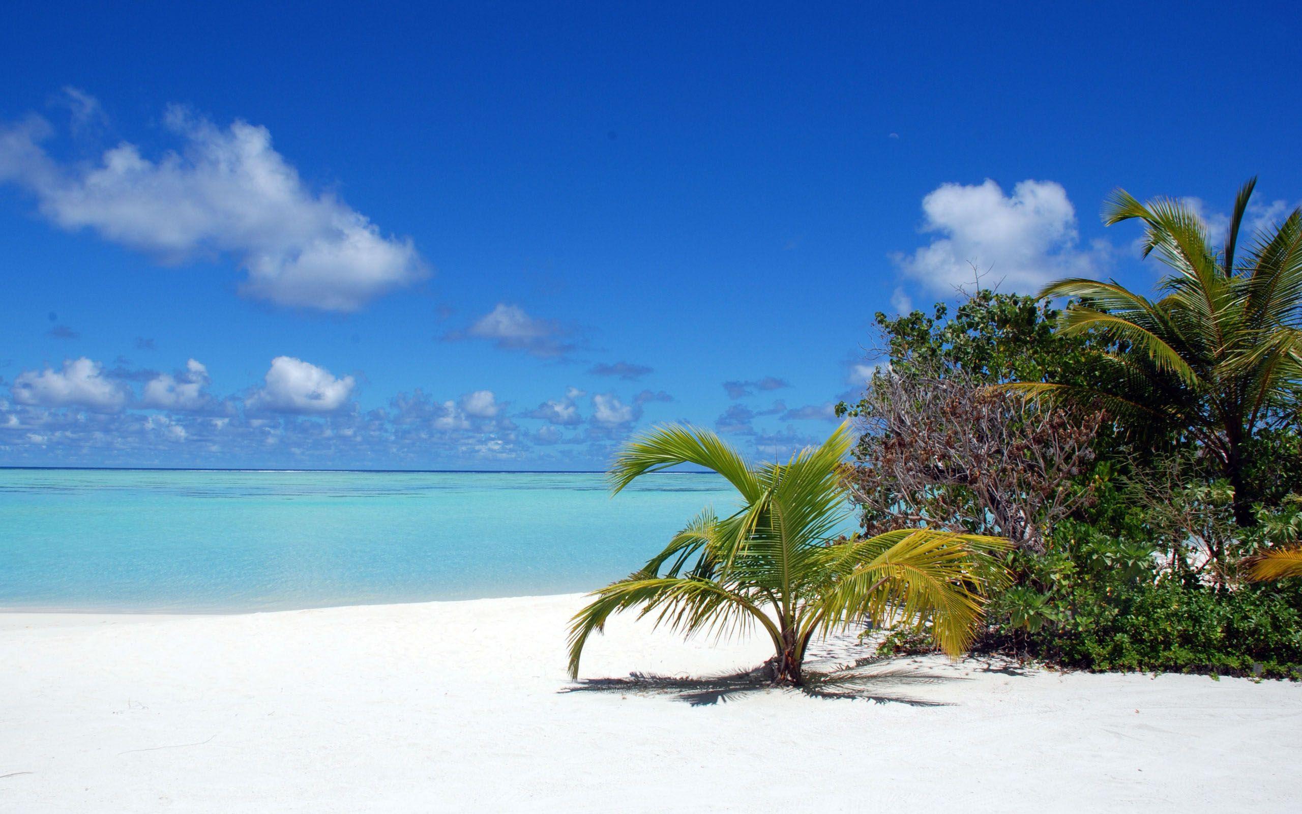Maldives Maldives beach, Beautiful beaches, Palm trees