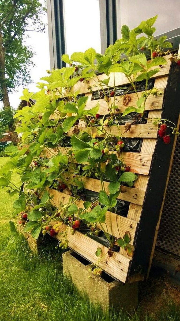Genius Vertical Gardening Ideas For Small Gardens ...
