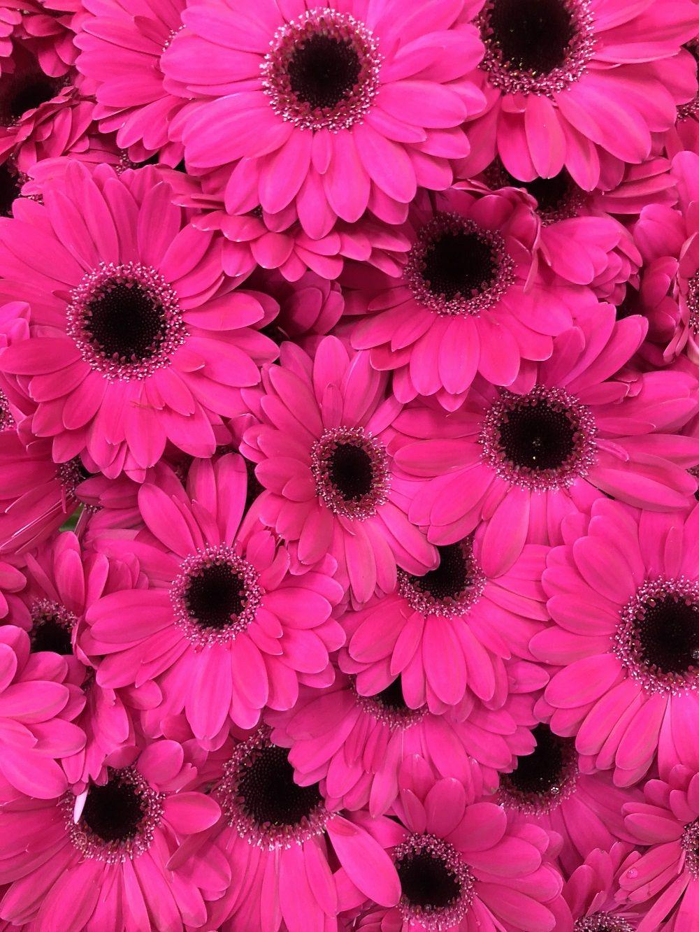 Germini | Wholesale Wedding Flowers | Pinterest | Wholesale flowers ...