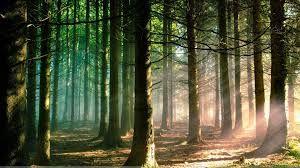 Bildresultat för forest morning