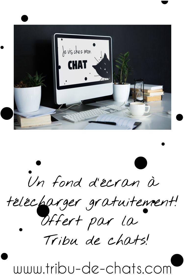 Un Fond D Ecran Je Vis Chez Mon Chat Offert Par La Tribu De Chats Cliquez Pour Telecharger Ce Fond D Ecran Fond D Ecran Ete Fond Ecran Fond D Ecran Original