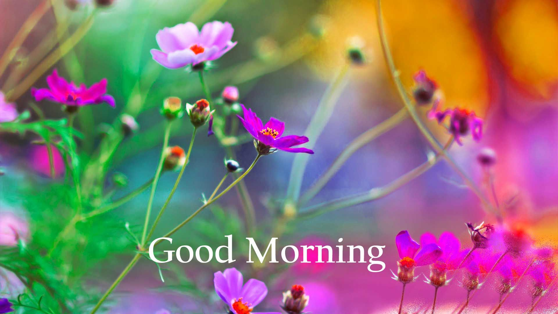 Good Morning Images For Whatsapp Free Download Hd Wallpaper Pictures Photos Of Good Morning In 2020 Good Morning Images Good Morning Images Hd Good Morning Inspiration