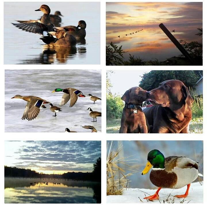Duck Hunting Supplies And Retriever Training Gear Waterfowl