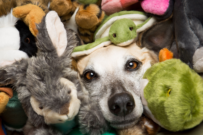 Fluff & Tuff dog toys Dog toys, Dog photos, Dogs