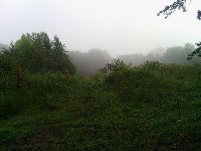 Tennessee morning fog