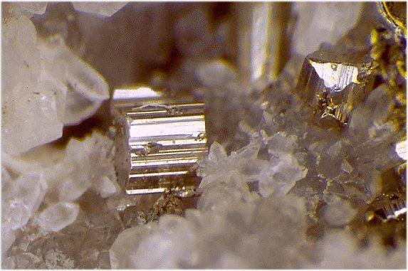 Calaverite, AuTe2, Cripple Creek, Teller County, Colorado, USA. Quartz matrix with abundant calaverite crystals. © Lou Perloff /