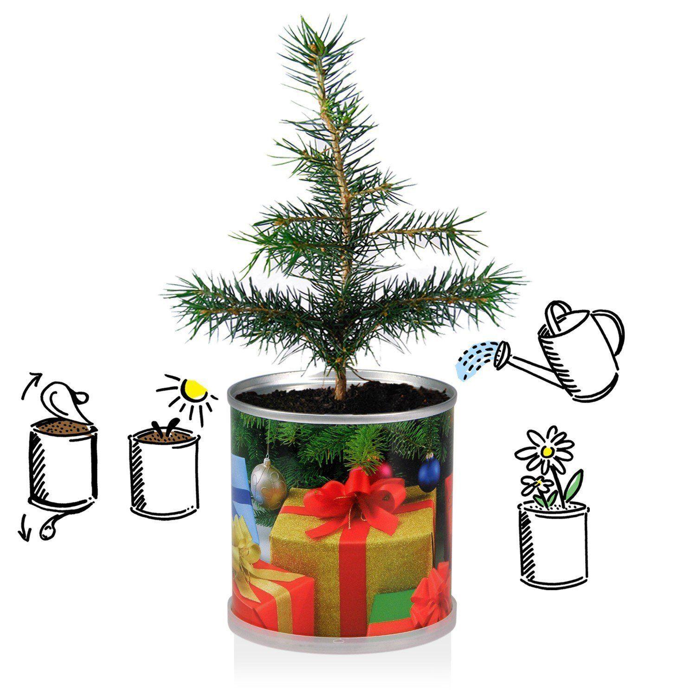 Weihnachtsbaum in der Dose - Merry Christmas Grün #Weihnachtsbaum ...