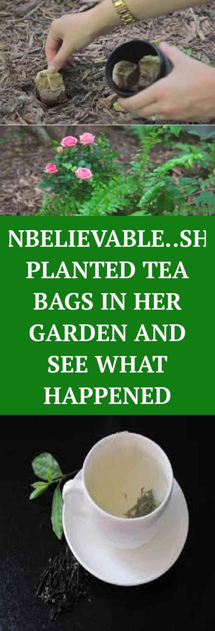 Read. Read information on SHE PLANTED THESE TEA BAGS IN HER GARDEN Every woman should know.  Great....