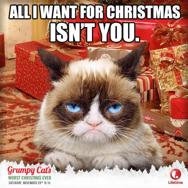 Catvent Grumpy cat christmas, Grumpy cat, Grumpy cat quotes