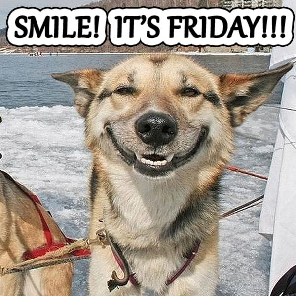Happy Friday! #Friday #Smile #Dog #funny | Laughter is the ...