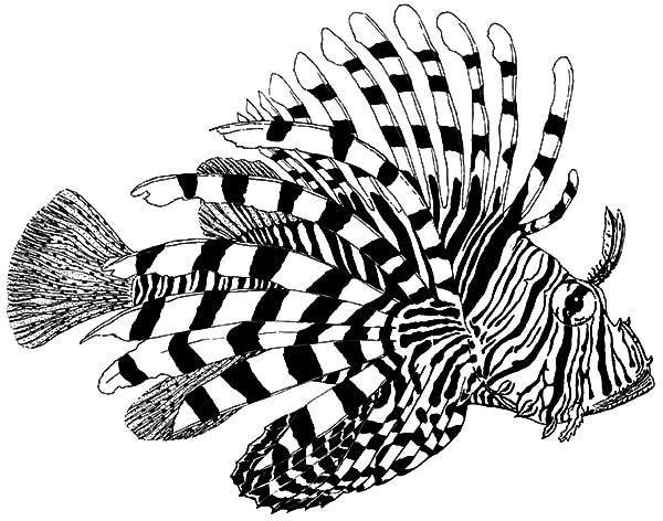 Image result for tropical fish coloring pages for adults
