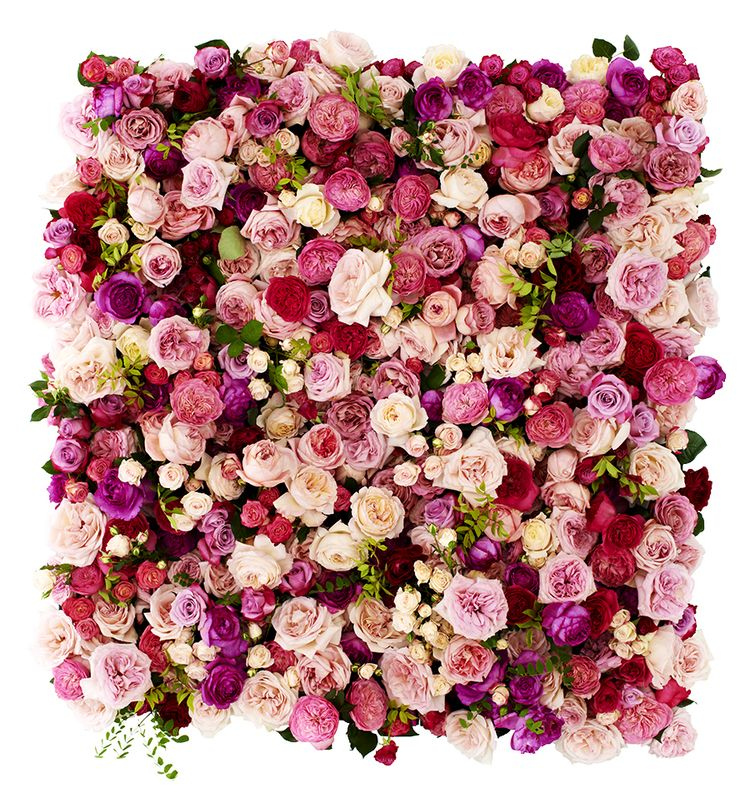 Oh wie ist das sch n rose flowers blumen twbm for Pinterest blumen