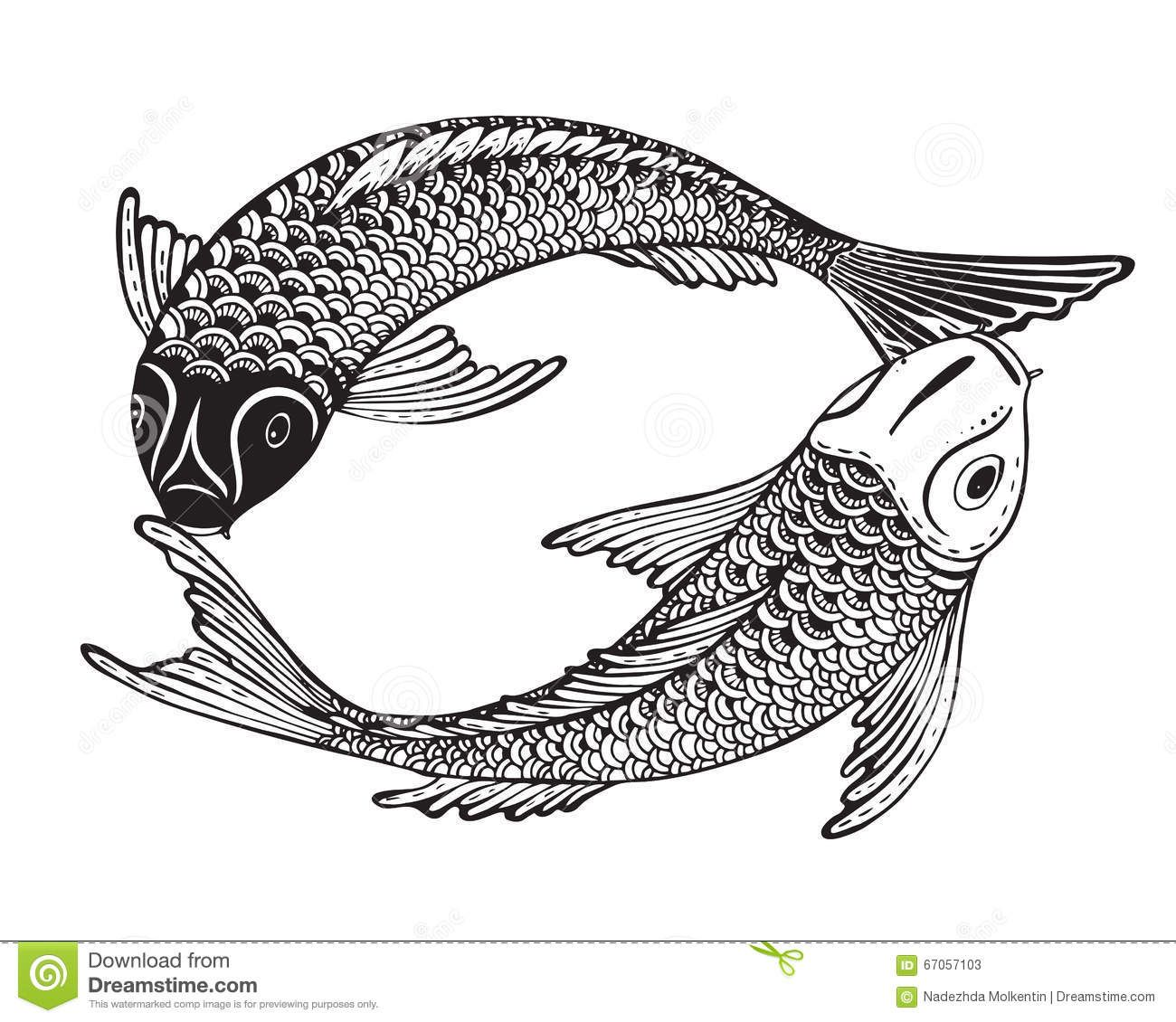 Chinese koi illustrations hand drawn vector illustration of two koi fishes japanese carp stock