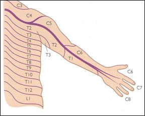 Pin On Pain In The Neck