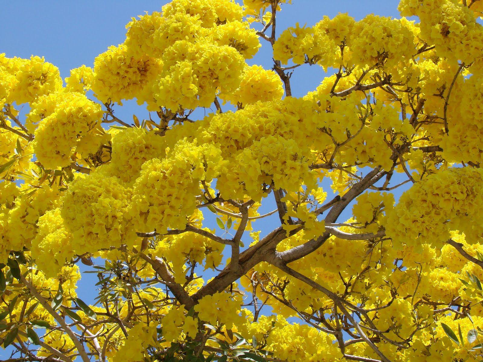 Angelil adventures whats that neonyellow tree yellow