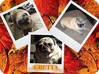 Walled Lake Mi Pug Meet Greta A Dog For Adoption Http Www