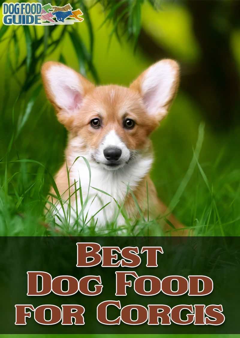 Best Dog Food dog, Dog food recipes, Dogs
